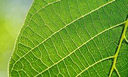 Leaf-Fertilizer